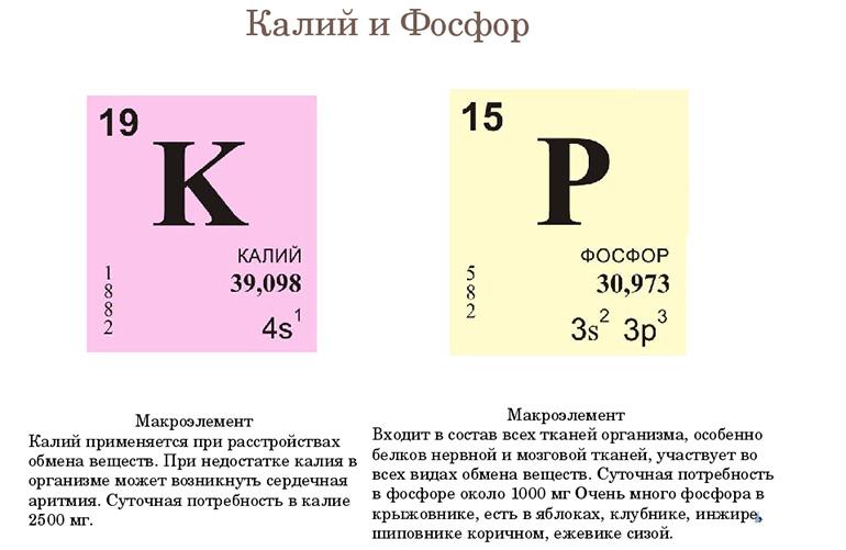 Калий и фосфор в грецком орехе