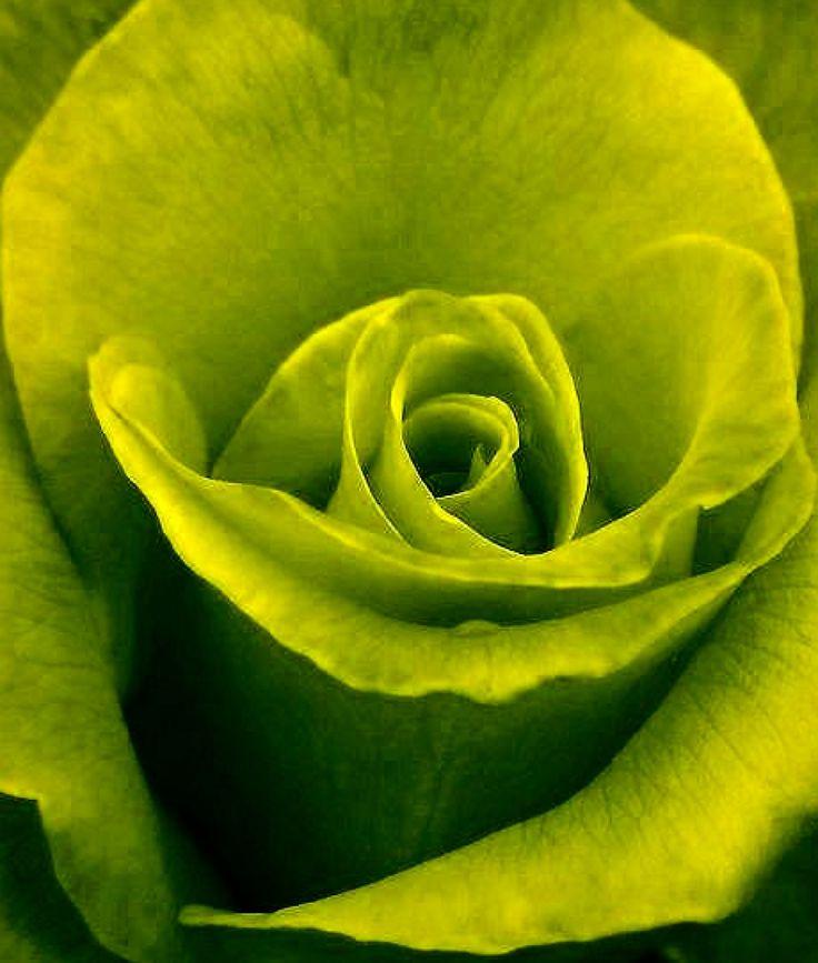 Зеленый шартрез